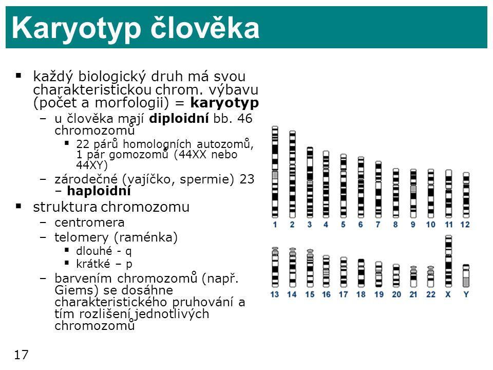 17 Karyotyp člověka  každý biologický druh má svou charakteristickou chrom. výbavu (počet a morfologii) = karyotyp –u člověka mají diploidní bb. 46 c