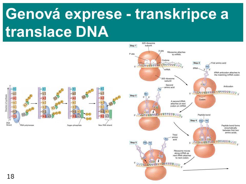 18 Genová exprese - transkripce a translace DNA