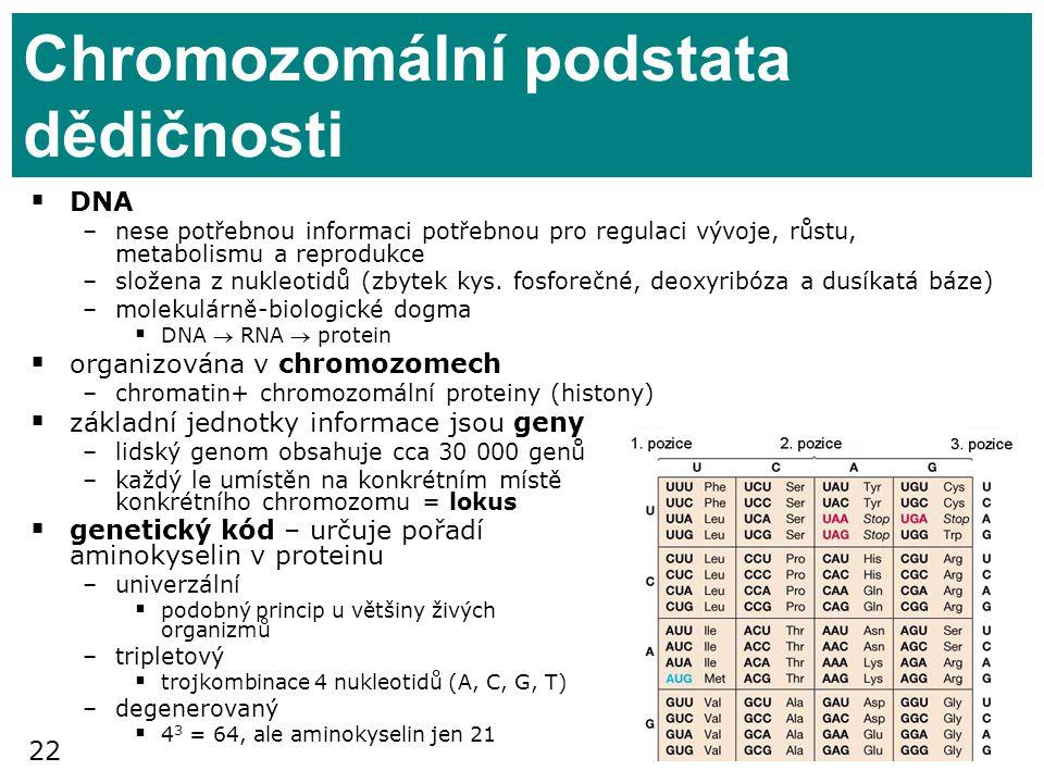 22 Chromozomální podstata dědičnosti  DNA –nese potřebnou informaci potřebnou pro regulaci vývoje, růstu, metabolismu a reprodukce –složena z nukleot