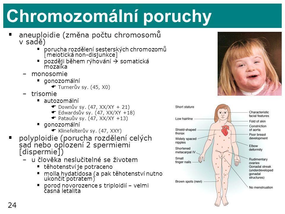 24 Chromozomální poruchy  aneuploidie (změna počtu chromosomů v sadě)  porucha rozdělení sesterských chromozomů [meiotická non-disjunkce]  později