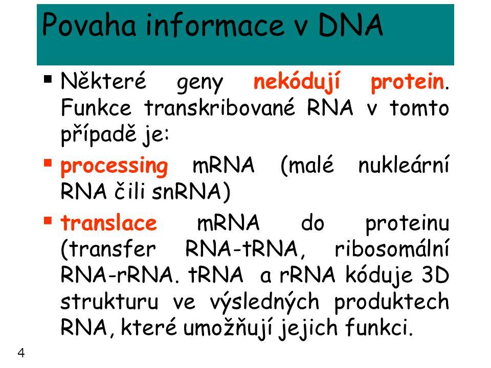 4 Povaha informace v DNA  Některé geny nekódují protein. Funkce transkribované RNA v tomto případě je:  processing mRNA (malé nukleární RNA čili snR