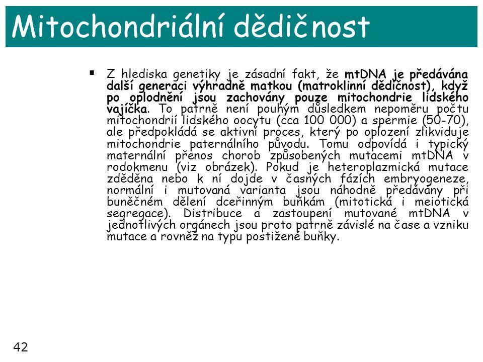 42 Mitochondriální dědičnost  Z hlediska genetiky je zásadní fakt, že mtDNA je předávána další generaci výhradně matkou (matroklinní dědičnost), když