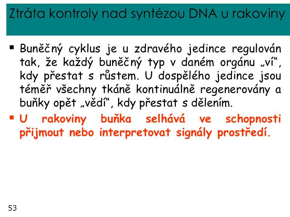 """53 Ztráta kontroly nad syntézou DNA u rakoviny  Buněčný cyklus je u zdravého jedince regulován tak, že každý buněčný typ v daném orgánu """"ví"""", kdy pře"""