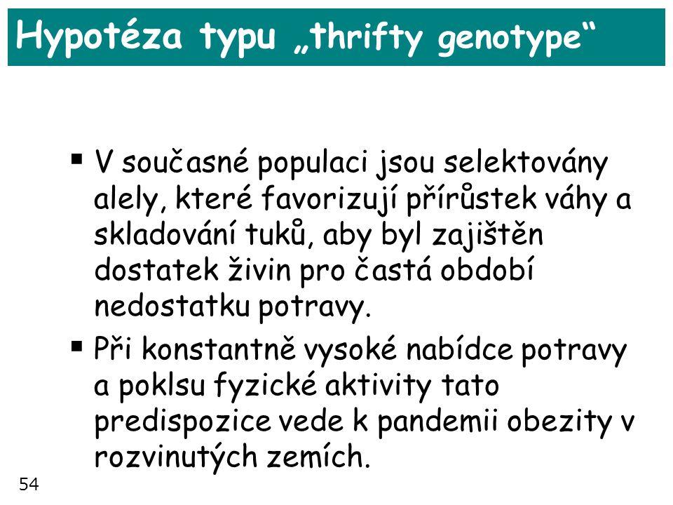 """54 Hypotéza typu """"t hrifty genotype""""  V současné populaci jsou selektovány alely, které favorizují přírůstek váhy a skladování tuků, aby byl zajištěn"""