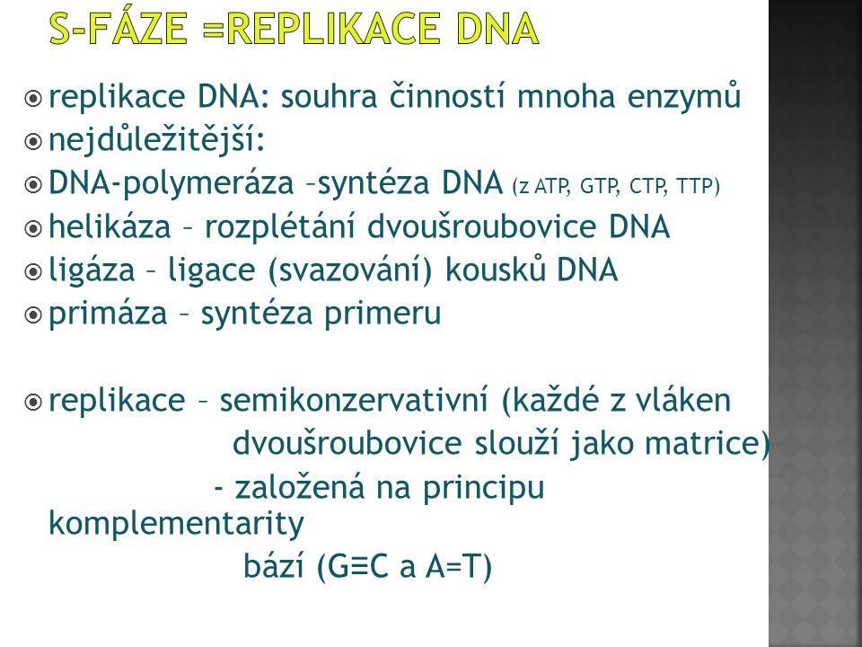  replikace DNA: souhra činností mnoha enzymů  nejdůležitější:  DNA-polymeráza –syntéza DNA (z ATP, GTP, CTP, TTP)  helikáza – rozplétání dvoušroub