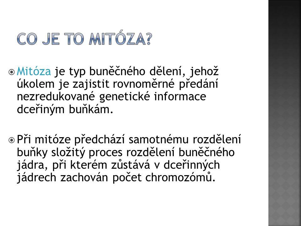  Mitóza je typ buněčného dělení, jehož úkolem je zajistit rovnoměrné předání nezredukované genetické informace dceřiným buňkám.  Při mitóze předcház