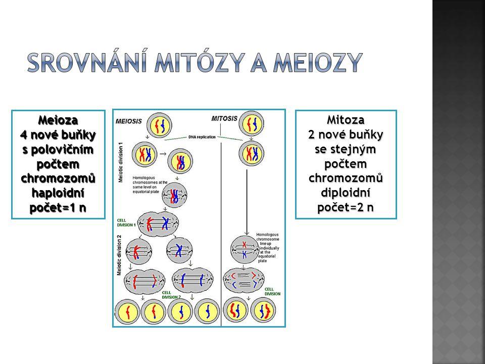 Mitoza 2 nové buňky se stejným počtem chromozomů diploidní počet=2 n Meioza 4 nové buňky s polovičním počtemchromozomůhaploidní počet=1 n