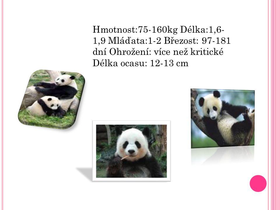 Hmotnost:75-160kg Délka:1,6- 1,9 Mláďata:1-2 Březost: 97-181 dní Ohrožení: více než kritické Délka ocasu: 12-13 cm