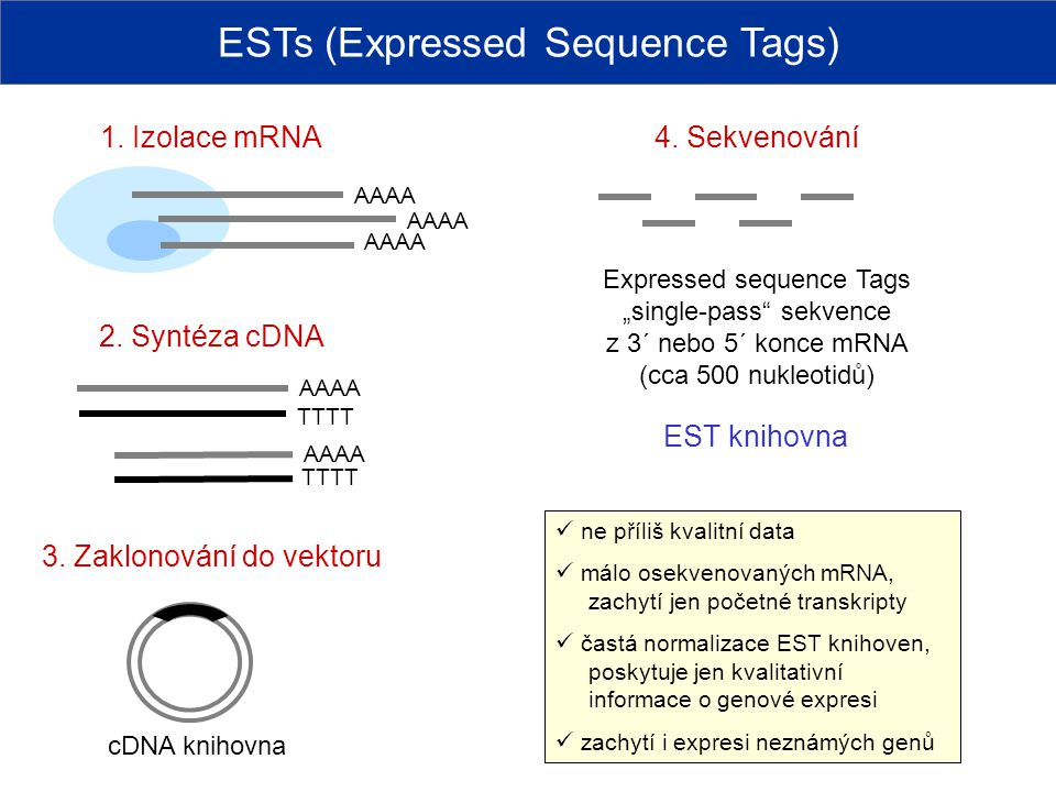 ESTs (Expressed Sequence Tags) AAAA 1.Izolace mRNA 2.