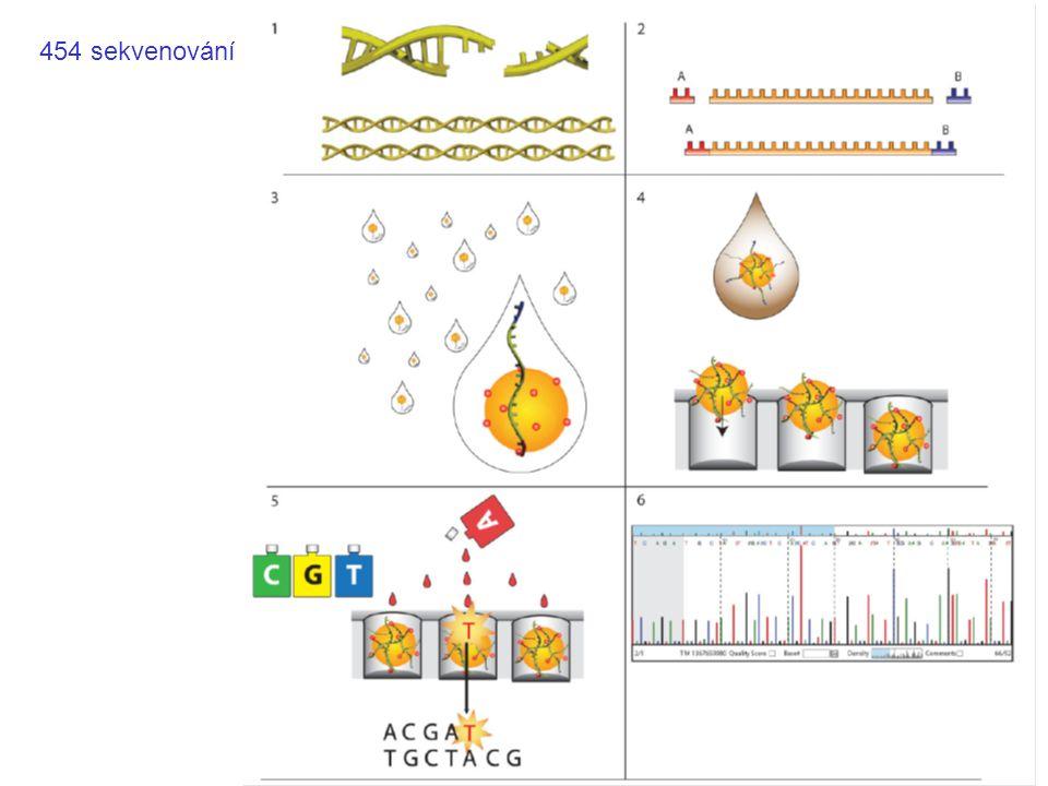 Sekvenování DNA IUPAC kódy pro nukleové kyseliny AAdenine CCytosine GGuanine TThymine UUracil RPurine (A or G) YPyrimidine (C, T, or U) MC or A KT, U, or G WT, U, or A SC or G BC, T, U, or G (not A) DA, T, U, or G (not C) HA, T, U, or C (not G) VA, C, or G (not T, not U) NAny base (A, C, G, T, or U) T G T T R A C T