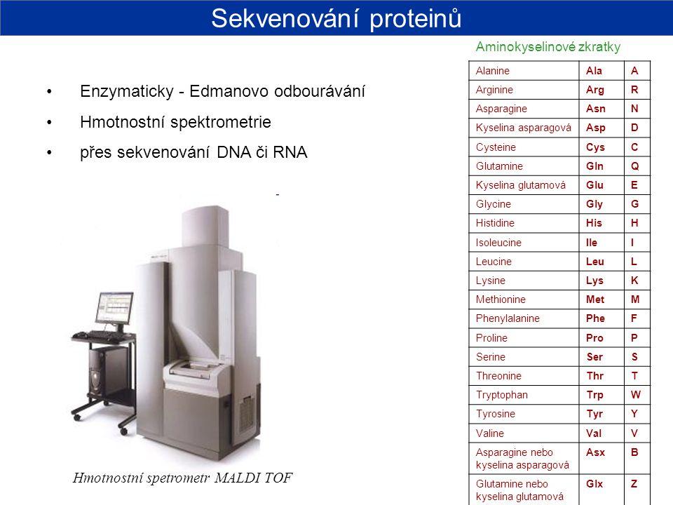 Enzymaticky - Edmanovo odbourávání Hmotnostní spektrometrie přes sekvenování DNA či RNA AlanineAlaA ArginineArgR AsparagineAsnN Kyselina asparagováAsp