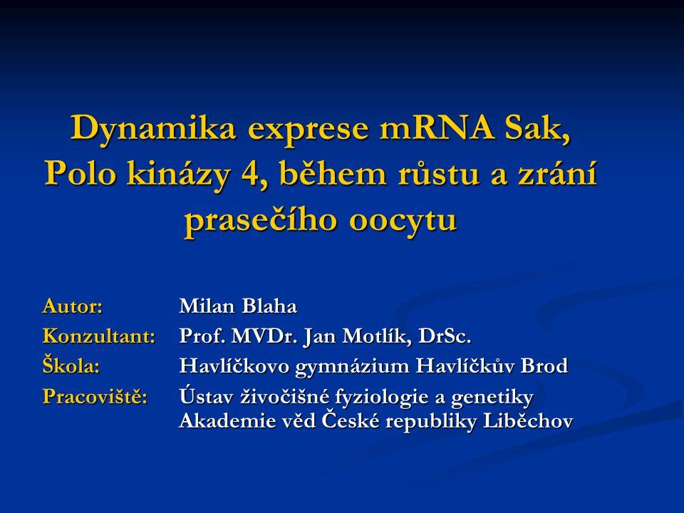 Dynamika exprese mRNA Sak, Polo kinázy 4, během růstu a zrání prasečího oocytu Autor: Milan Blaha Konzultant: Prof. MVDr. Jan Motlík, DrSc. Škola: Hav