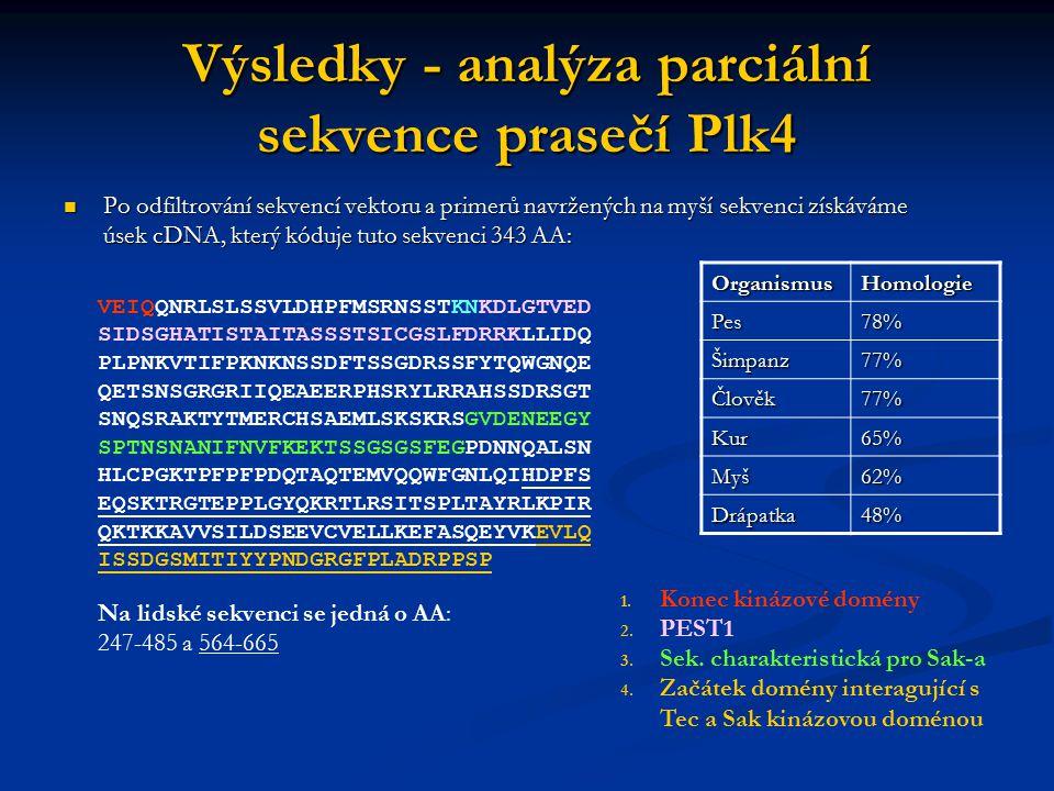 Výsledky - analýza parciální sekvence prasečí Plk4 Po odfiltrování sekvencí vektoru a primerů navržených na myší sekvenci získáváme úsek cDNA, který k