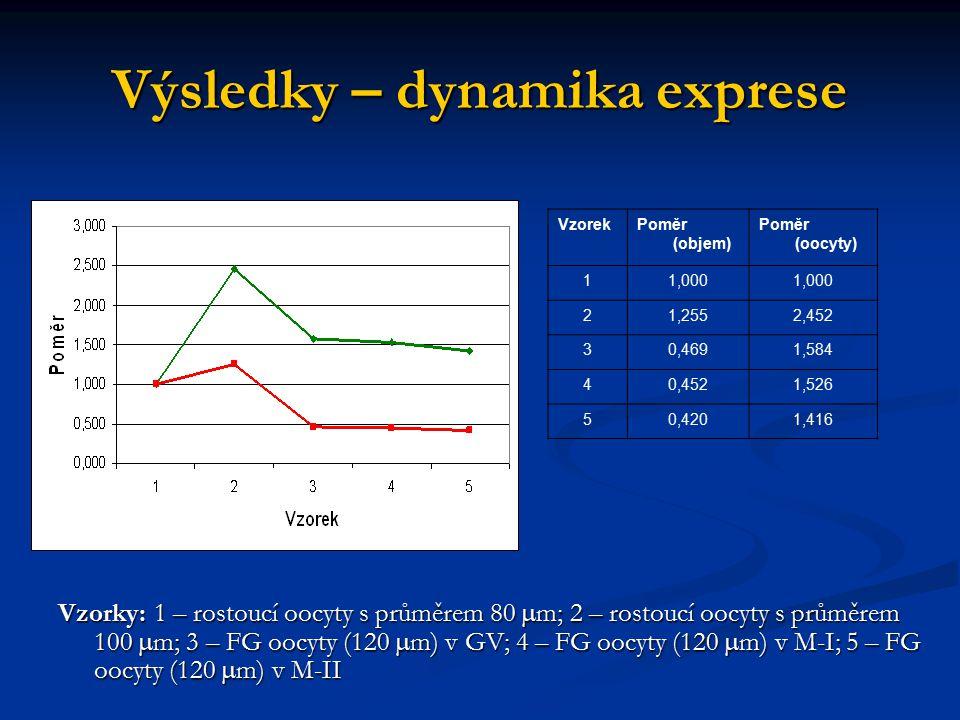 Výsledky – dynamika exprese Vzorky: 1 – rostoucí oocyty s průměrem 80  m; 2 – rostoucí oocyty s průměrem 100  m; 3 – FG oocyty (120  m) v GV; 4 – F