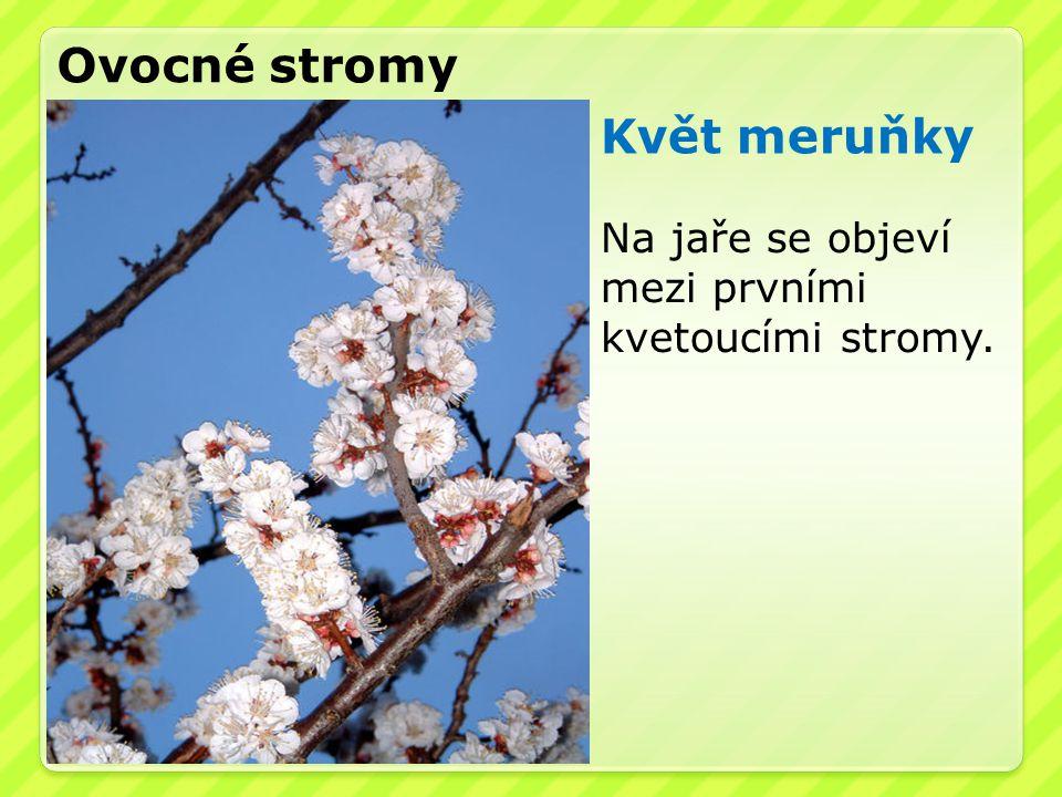 Ovocné stromy Květ meruňky Na jaře se objeví mezi prvními kvetoucími stromy.