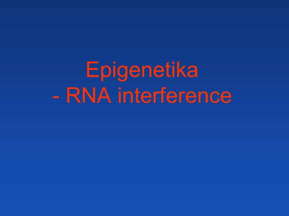 """- zvýšení exprese genu pro enzym syntézy pigmentu nečekaně způsobilo ztrátu pigmentace v částech květu Kosuprese u Petůnie K aberantním (""""podezřelým ) transkriptům vytváří RdRP (RDR6; = RNA dependentní RNA polymeráza) komplementární vlákno - ze vzniklé dsRNA se tvoří malé RNA, které blokují expresi příslušného genu (transgenu in cis a interního rostlinného genu in trans) Praktické využití při funkčních analýzách genů (modulaci exprese) – overexprese i knock-out jedním konstruktem."""