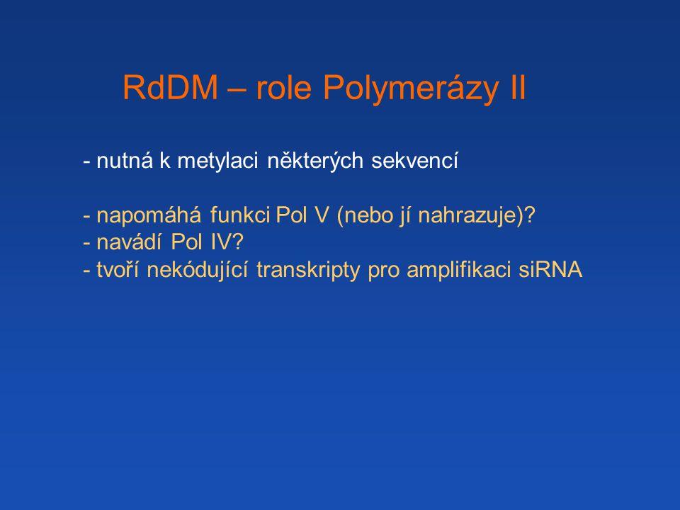 - nutná k metylaci některých sekvencí - napomáhá funkci Pol V (nebo jí nahrazuje).