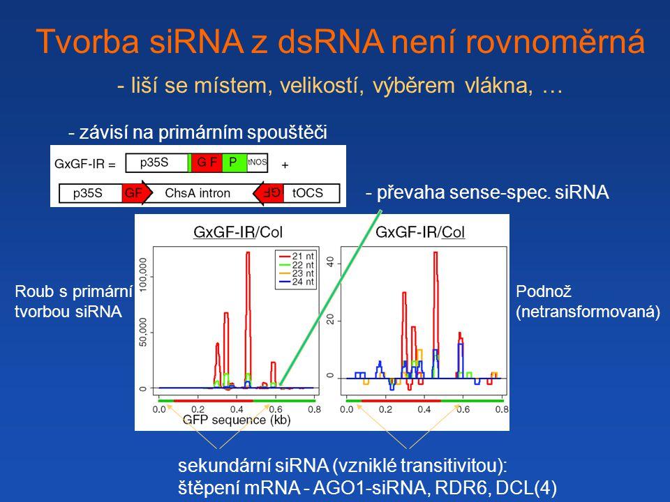 Tvorba siRNA z dsRNA není rovnoměrná - liší se místem, velikostí, výběrem vlákna, … - převaha sense-spec.
