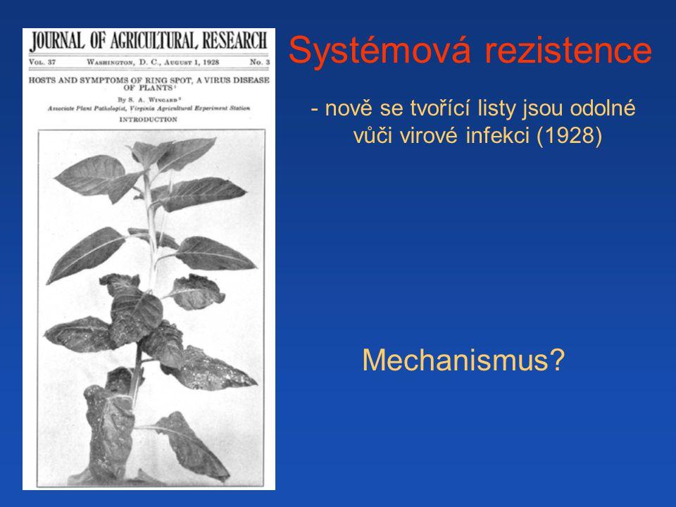 Systémová rezistence - nově se tvořící listy jsou odolné vůči virové infekci (1928) Mechanismus?