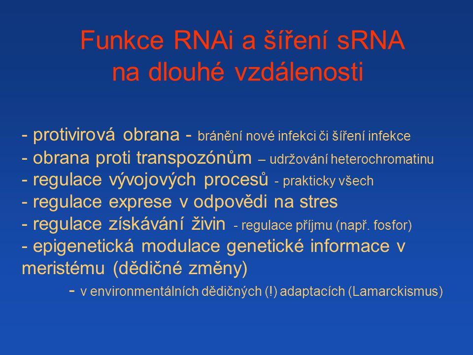 Funkce RNAi a šíření sRNA na dlouhé vzdálenosti - protivirová obrana - bránění nové infekci či šíření infekce - obrana proti transpozónům – udržování heterochromatinu - regulace vývojových procesů - prakticky všech - regulace exprese v odpovědi na stres - regulace získávání živin - regulace příjmu (např.