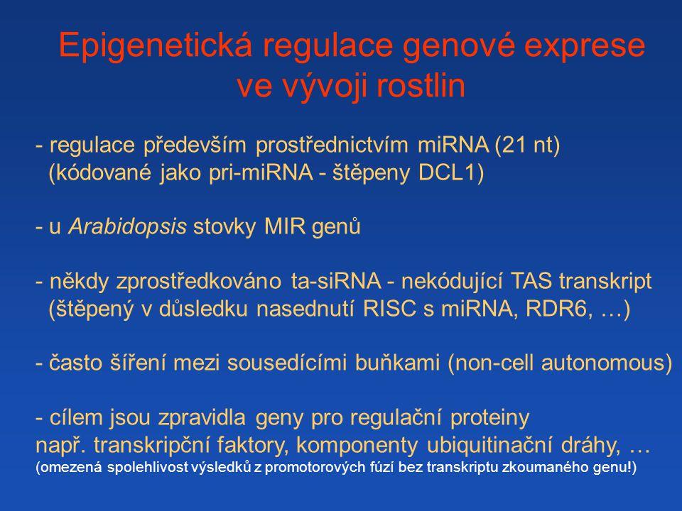 Epigenetická regulace genové exprese ve vývoji rostlin - regulace především prostřednictvím miRNA (21 nt) (kódované jako pri-miRNA - štěpeny DCL1) - u Arabidopsis stovky MIR genů - někdy zprostředkováno ta-siRNA - nekódující TAS transkript (štěpený v důsledku nasednutí RISC s miRNA, RDR6, …) - často šíření mezi sousedícími buňkami (non-cell autonomous) - cílem jsou zpravidla geny pro regulační proteiny např.