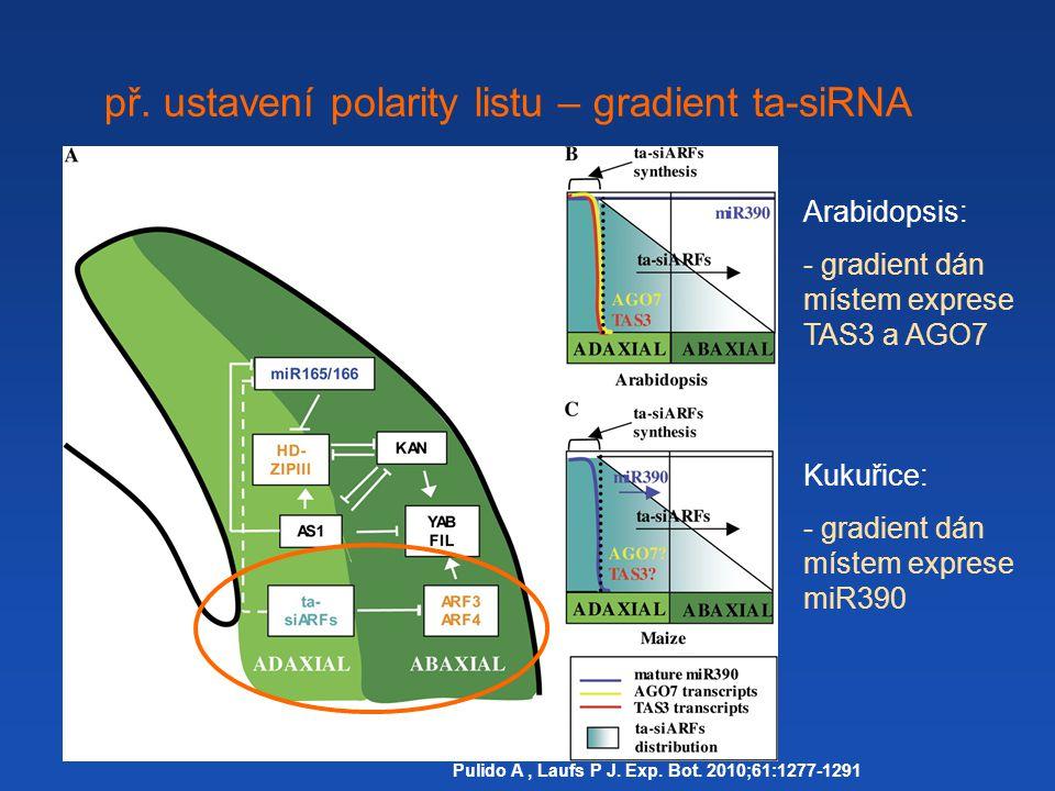 př.ustavení polarity listu – gradient ta-siRNA Pulido A, Laufs P J.