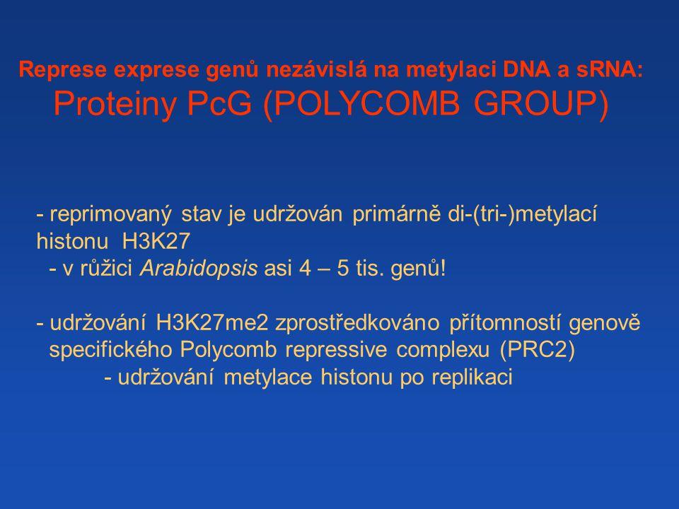 - reprimovaný stav je udržován primárně di-(tri-)metylací histonu H3K27 - v růžici Arabidopsis asi 4 – 5 tis.