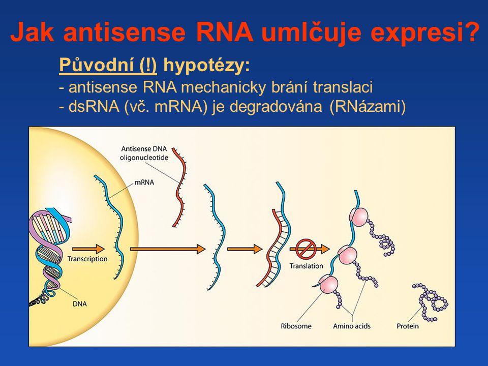 Mechanismus účinku malých RNA závisí mj.