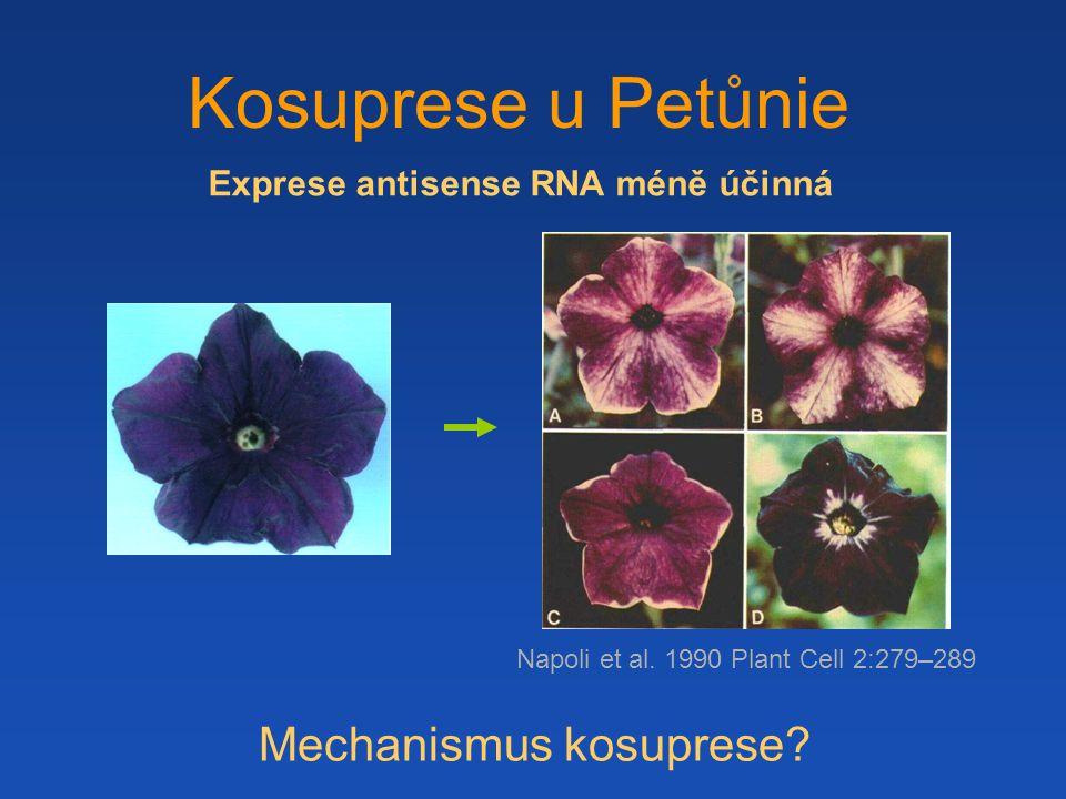 Exprese antisense RNA méně účinná Kosuprese u Petůnie Napoli et al.