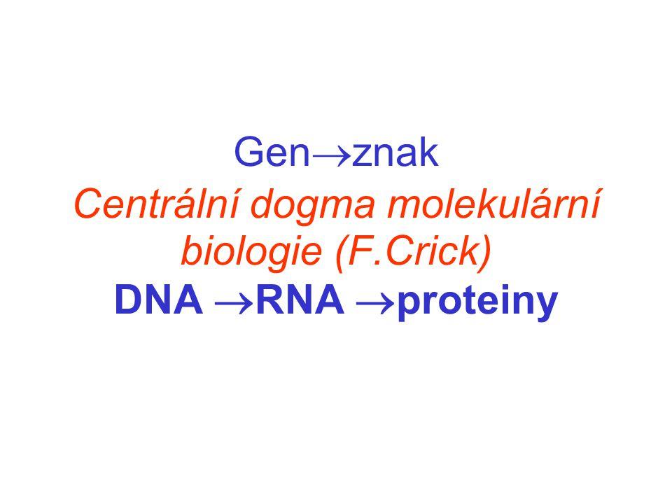 Gen  znak Centrální dogma molekulární biologie (F.Crick) DNA  RNA  proteiny