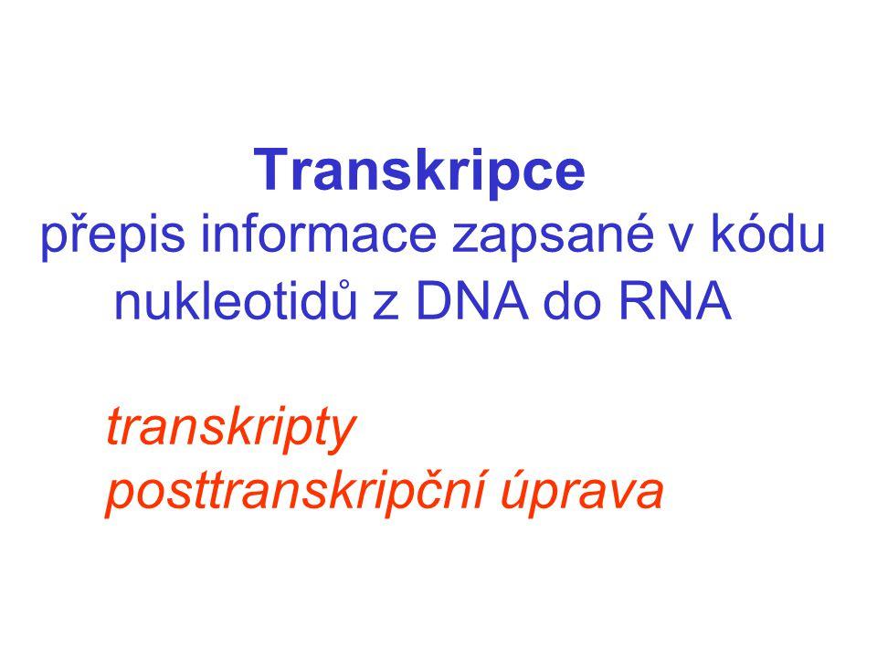 Transkripce přepis informace zapsané v kódu nukleotidů z DNA do RNA transkripty posttranskripční úprava