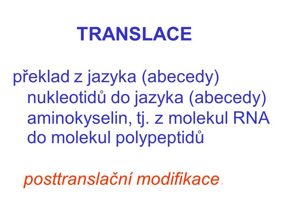 TRANSLACE překlad z jazyka (abecedy) nukleotidů do jazyka (abecedy) aminokyselin, tj. z molekul RNA do molekul polypeptidů posttranslační modifikace.