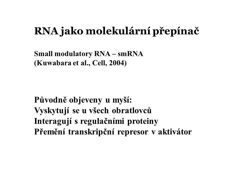 RNA jako molekulární přepínač Small modulatory RNA – smRNA (Kuwabara et al., Cell, 2004) Původně objeveny u myší: Vyskytují se u všech obratlovců Interagují s regulačními proteiny Přemění transkripční represor v aktivátor