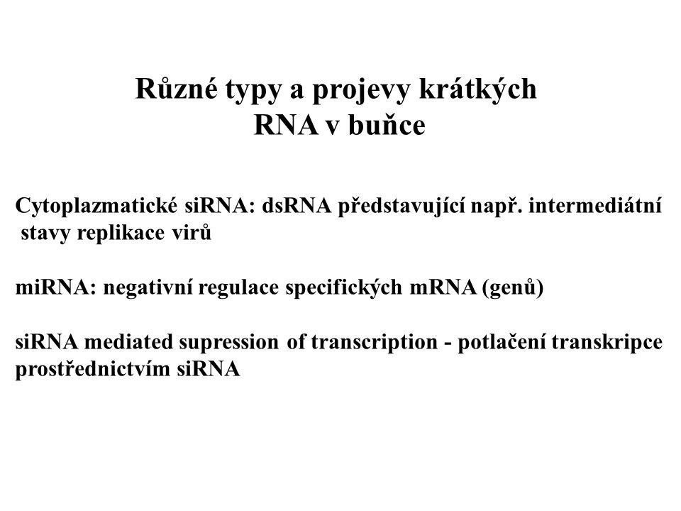 Cytoplazmatické siRNA: dsRNA představující např.