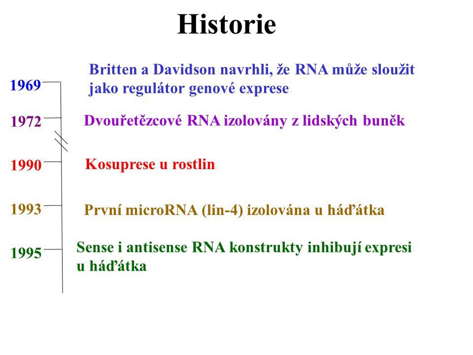Historie 1972 1990 1993 1995 1969 Britten a Davidson navrhli, že RNA může sloužit jako regulátor genové exprese Dvouřetězcové RNA izolovány z lidských buněk Kosuprese u rostlin První microRNA (lin-4) izolována u háďátka Sense i antisense RNA konstrukty inhibují expresi u háďátka