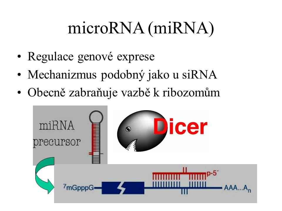 microRNA (miRNA) Regulace genové exprese Mechanizmus podobný jako u siRNA Obecně zabraňuje vazbě k ribozomům