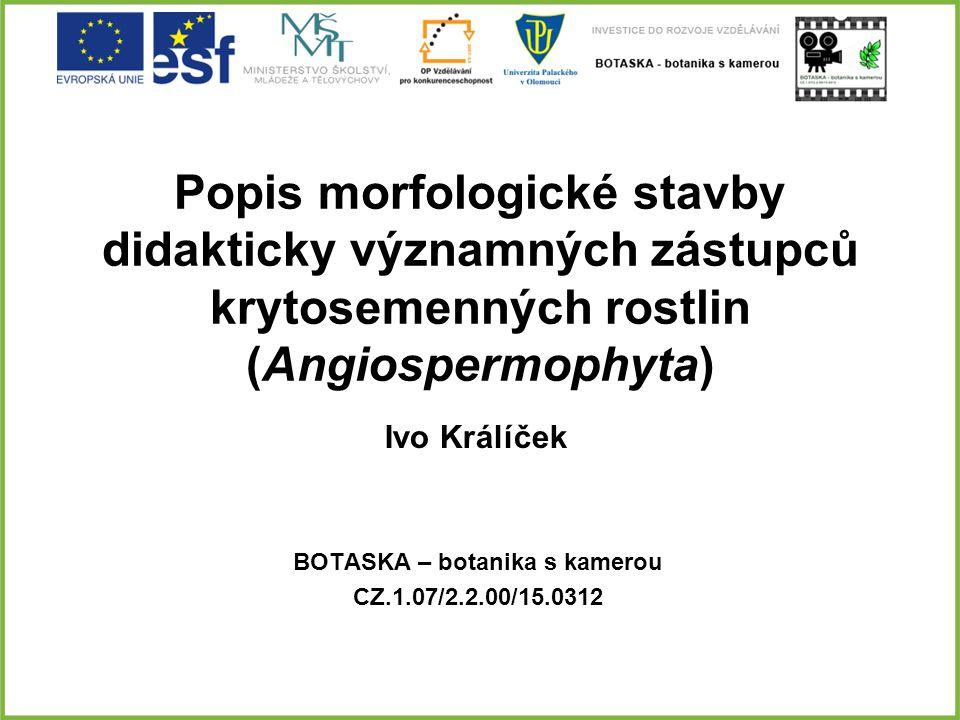 Popis morfologické stavby didakticky významných zástupců krytosemenných rostlin (Angiospermophyta) BOTASKA – botanika s kamerou CZ.1.07/2.2.00/15.0312