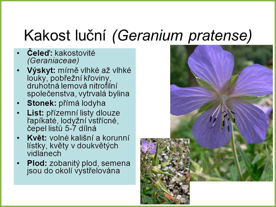 Kakost luční (Geranium pratense) Čeleď: kakostovité (Geraniaceae) Výskyt: mírně vlhké až vlhké louky, pobřežní křoviny, druhotná lemová nitrofilní spo
