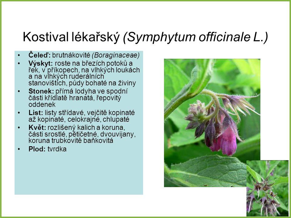 Kostival lékařský (Symphytum officinale L.) Čeleď: brutnákovité (Boraginaceae) Výskyt: roste na březích potoků a řek, v příkopech, na vlhkých loukách