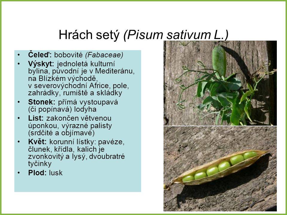 Hrách setý (Pisum sativum L.) Čeleď: bobovité (Fabaceae) Výskyt: jednoletá kulturní bylina, původní je v Mediteránu, na Blízkém východě, v severovýcho