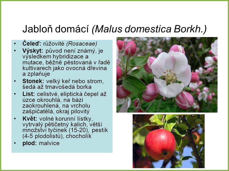 Jabloň domácí (Malus domestica Borkh.) Čeleď: růžovité (Rosaceae) Výskyt: původ není známý, je výsledkem hybridizace a mutace, běžně pěstovaná v řadě