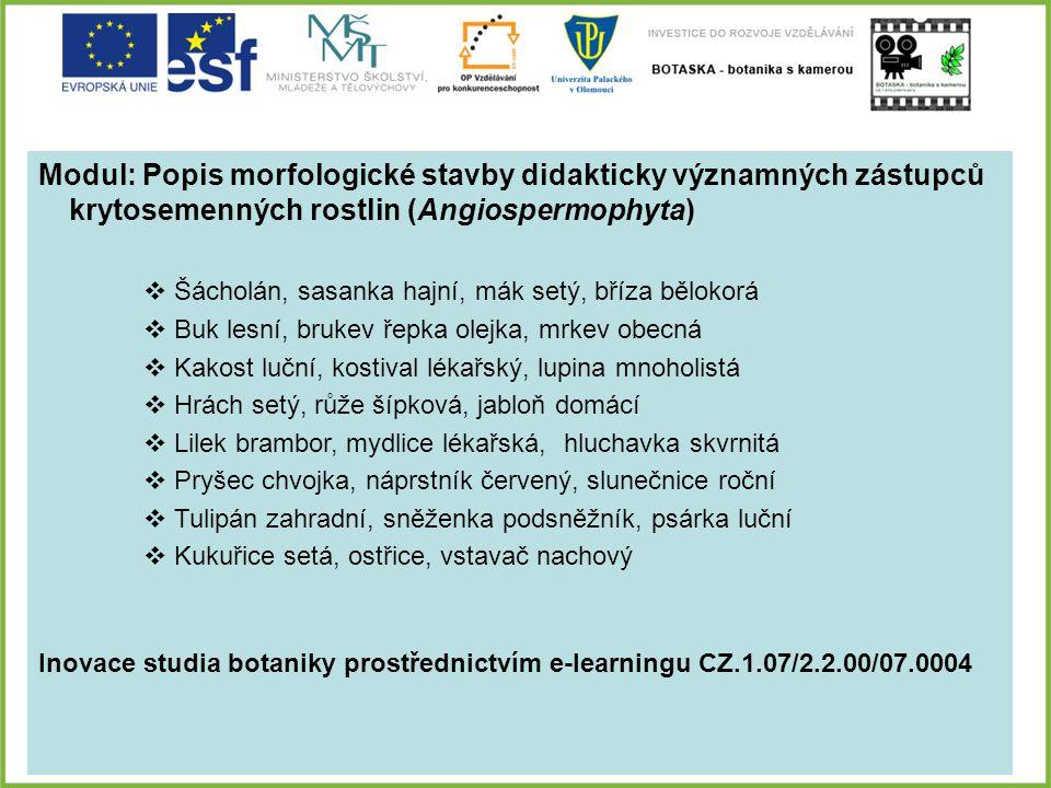 Modul: Popis morfologické stavby didakticky významných zástupců krytosemenných rostlin (Angiospermophyta)  Šácholán, sasanka hajní, mák setý, bříza b