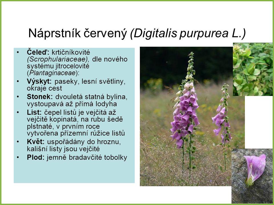 Náprstník červený (Digitalis purpurea L.) Čeleď: krtičníkovité (Scrophulariaceae), dle nového systému jitrocelovité (Plantaginaceae): Výskyt: paseky,