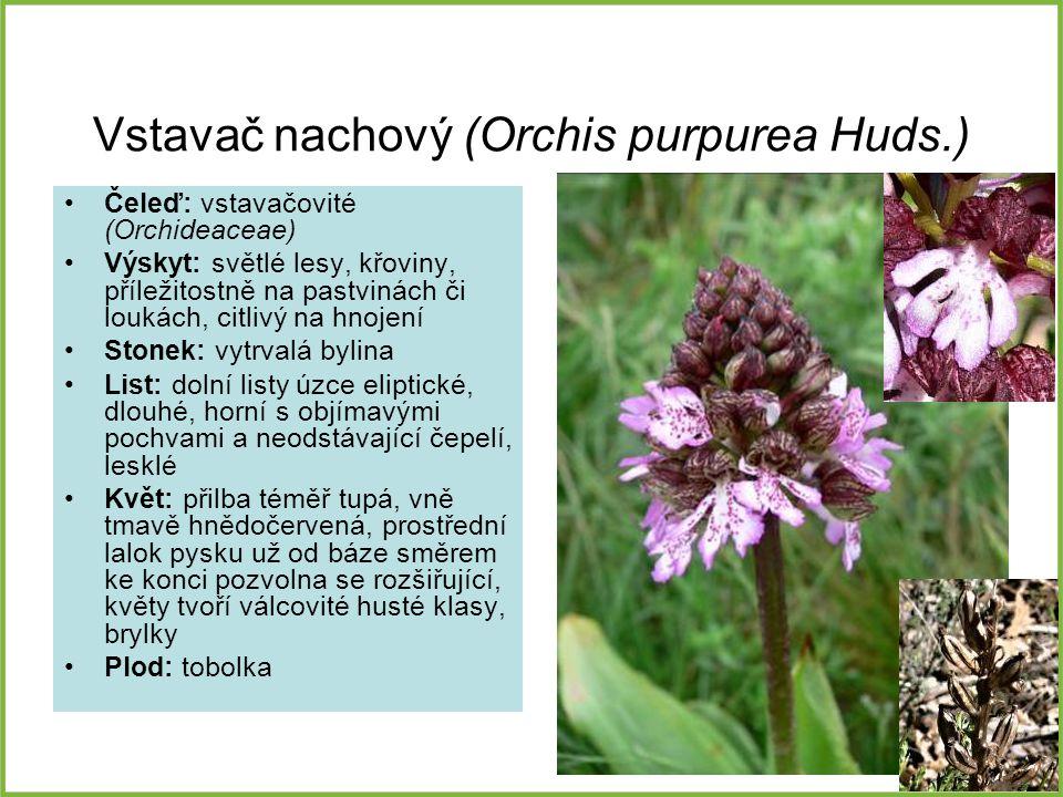Vstavač nachový (Orchis purpurea Huds.) Čeleď: vstavačovité (Orchideaceae) Výskyt: světlé lesy, křoviny, příležitostně na pastvinách či loukách, citli