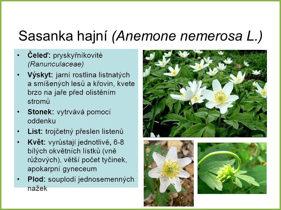 Sasanka hajní (Anemone nemerosa L.) Čeleď: pryskyřníkovité (Ranunculaceae) Výskyt: jarní rostlina listnatých a smíšených lesů a křovin, kvete brzo na