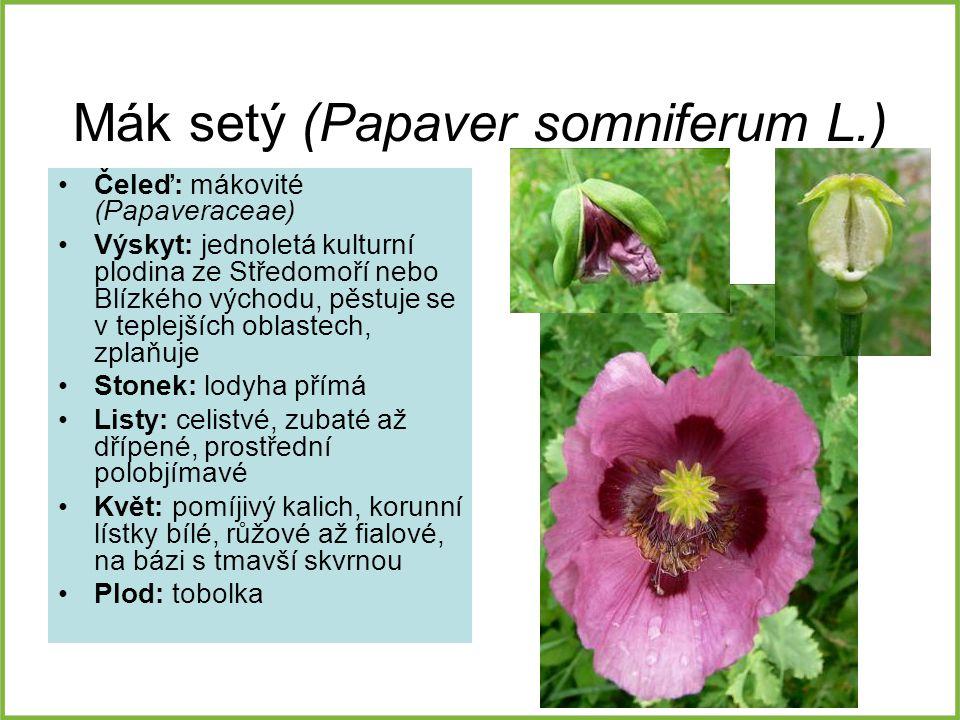 Mák setý (Papaver somniferum L.) Čeleď: mákovité (Papaveraceae) Výskyt: jednoletá kulturní plodina ze Středomoří nebo Blízkého východu, pěstuje se v t