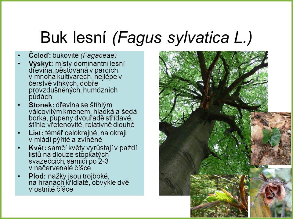 Buk lesní (Fagus sylvatica L.) Čeleď: bukovité (Fagaceae) Výskyt: místy dominantní lesní dřevina, pěstovaná v parcích v mnoha kultivarech, nejlépe v č