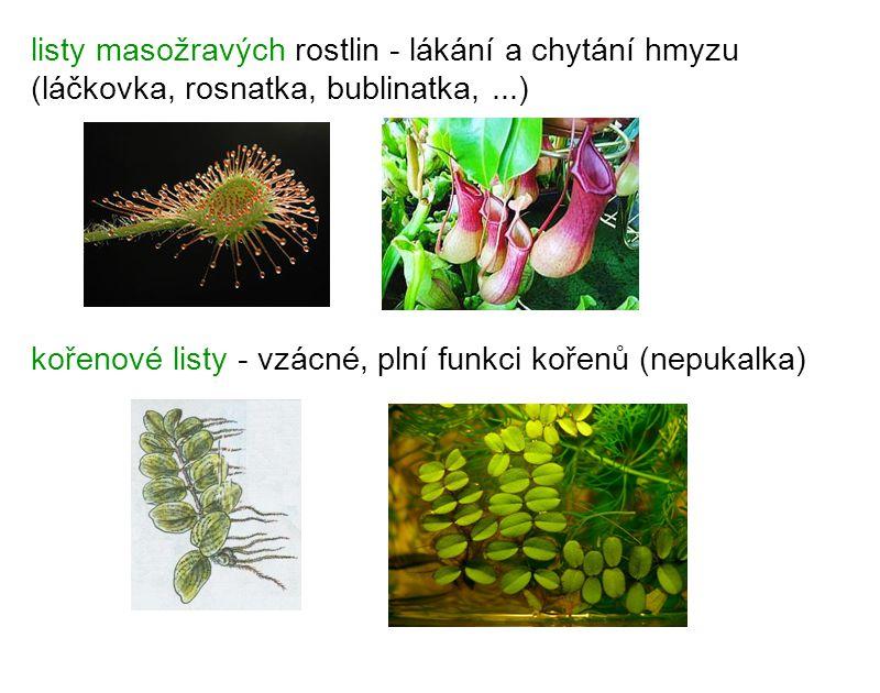 listy masožravých rostlin - lákání a chytání hmyzu (láčkovka, rosnatka, bublinatka,...) kořenové listy - vzácné, plní funkci kořenů (nepukalka)