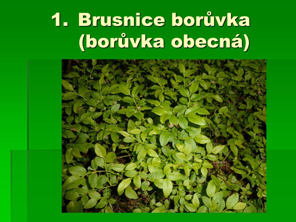 1.Brusnice borůvka (borůvka obecná)