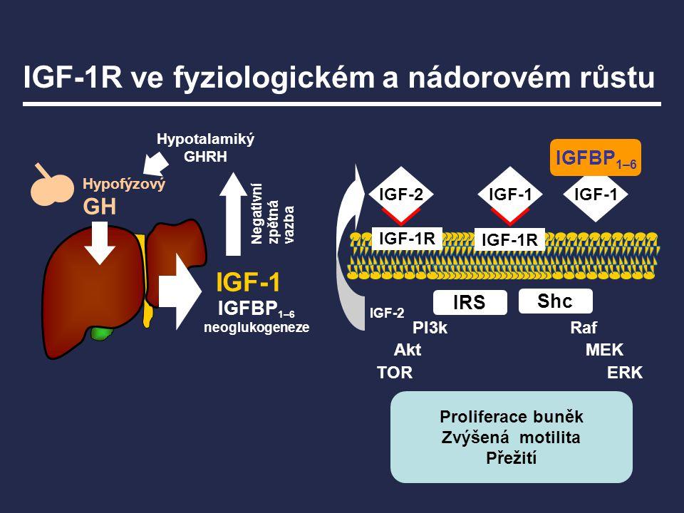 Hypotalamiký GHRH Hypofýzový GH PI3kRaf MEK ERK Akt TOR IRS IGF-1 IGF-1R IGF-2 IGF-1R IGFBP 1–6 neoglukogeneze Shc Negativní zpětná vazba IGF-2 IGF-1